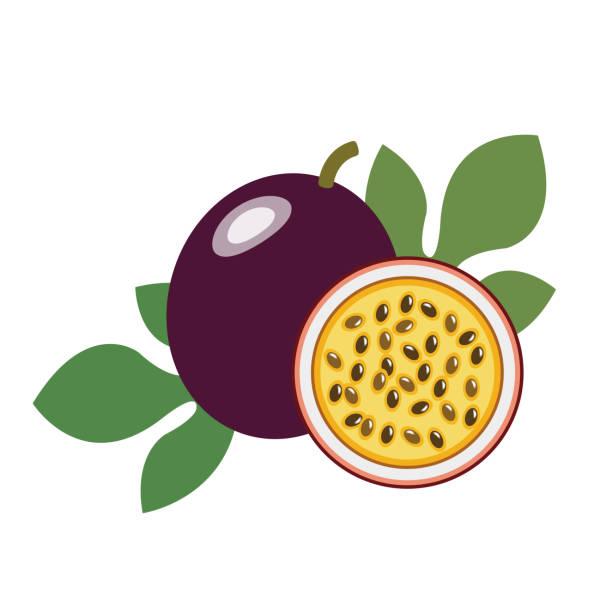 illustrations, cliparts, dessins animés et icônes de fruit de la passion bio du sain, objets de fruits frais coloré de nature tropicale. - fruit de la passion