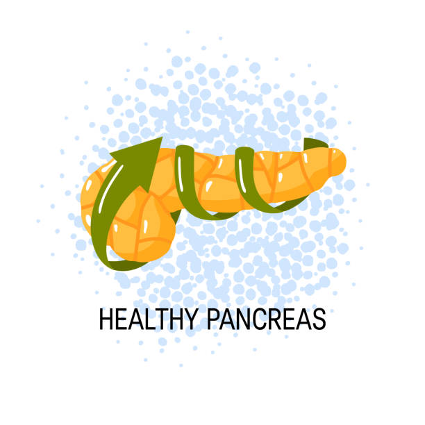 gesunde bauchspeicheldrüse konzept. vektor-illustration - enzyme stoffwechsel stock-grafiken, -clipart, -cartoons und -symbole