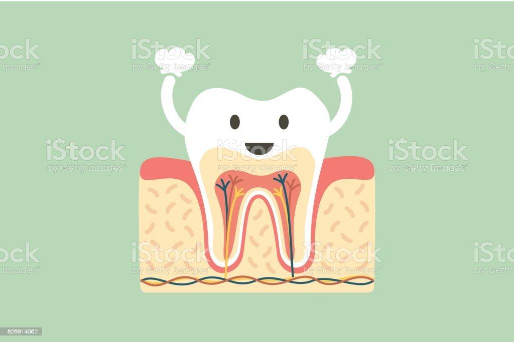 Ilustración de Anatomía Dental Sana Es Divertido y más banco de ...