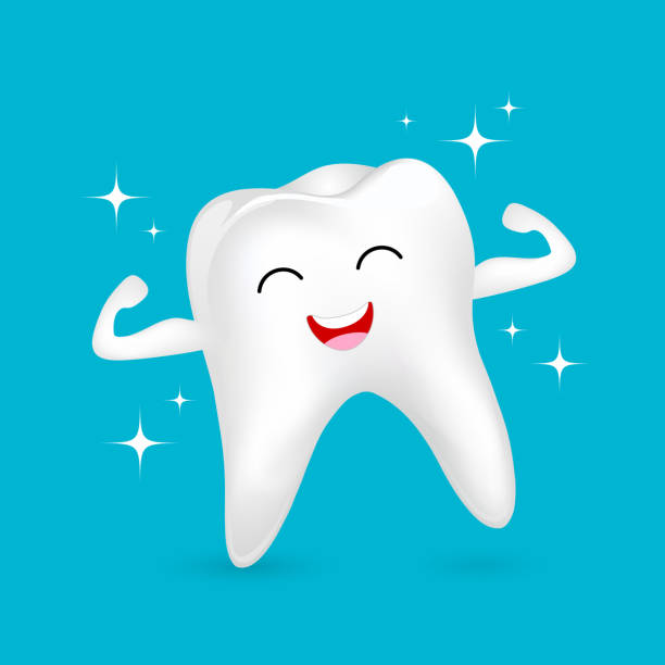 illustrazioni stock, clip art, cartoni animati e icone di tendenza di healthy tooth character showing muscle with smiley face. - denti