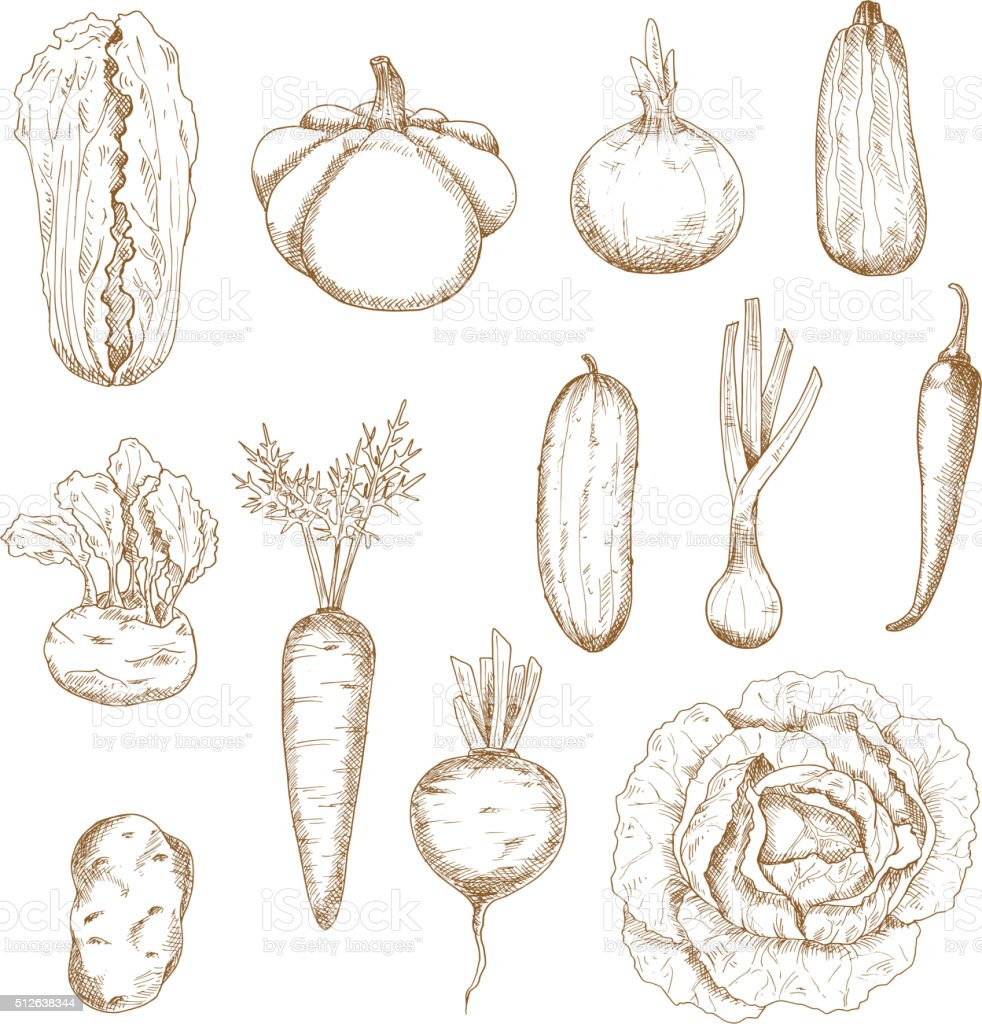 Healthy vegetables  isolated sketches set vector art illustration