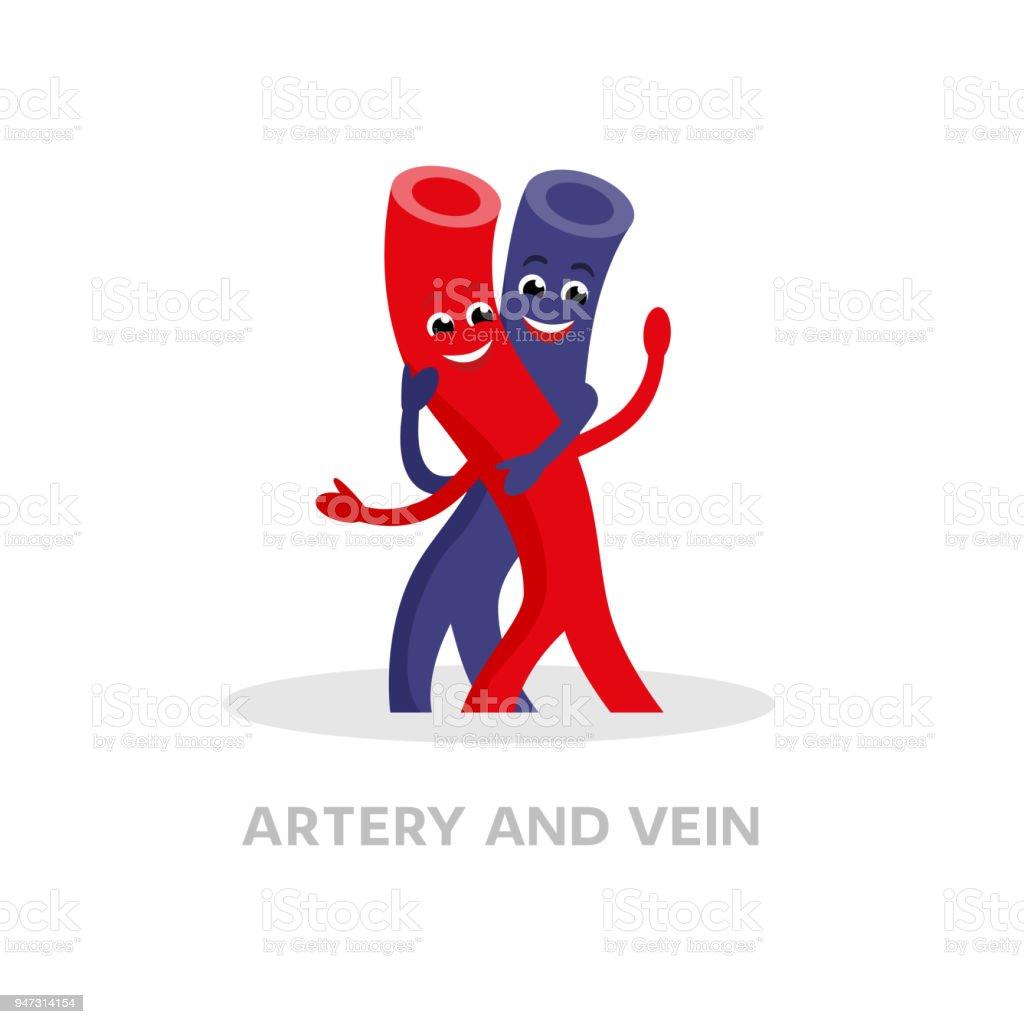 Gesunde Vene Und Arterie Zeichentrickfigur Isoliert Auf Weißem ...