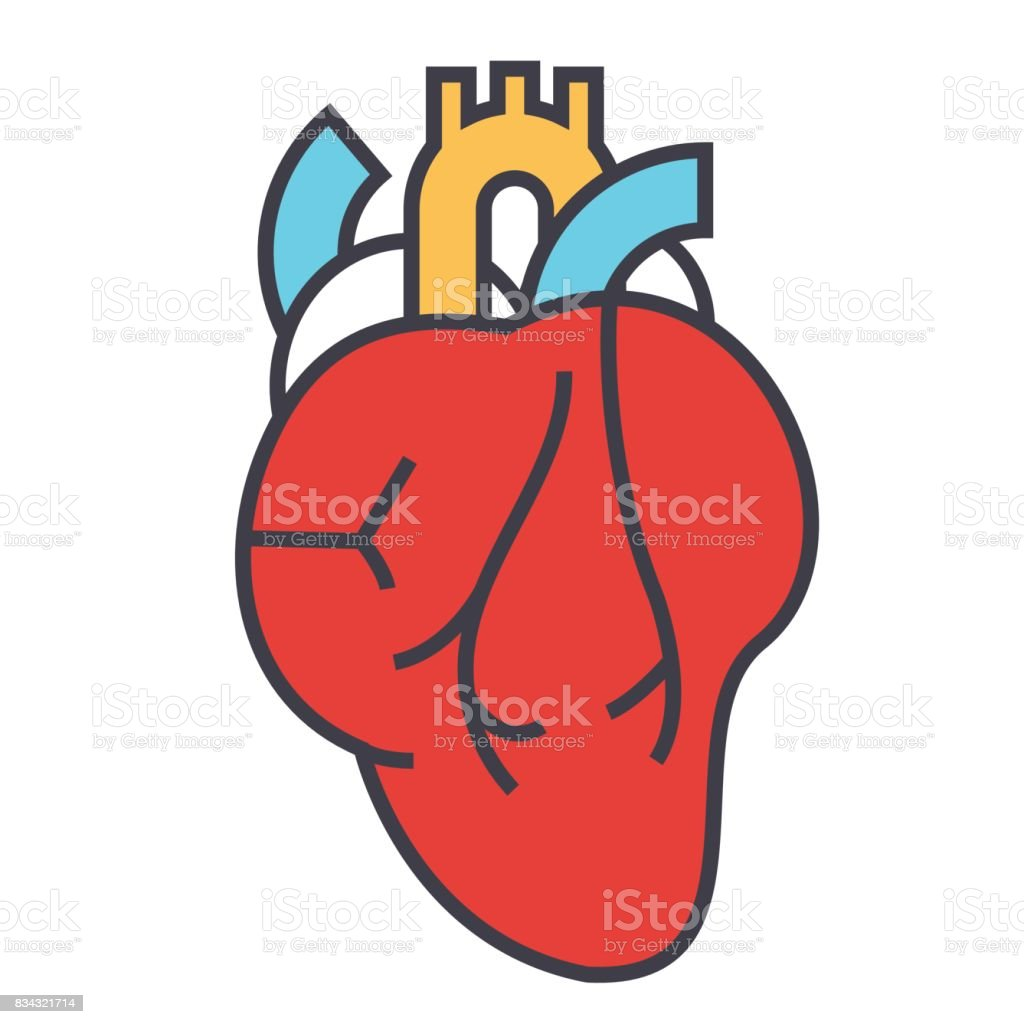 Heart anatomy, cardiology concept. Line vector icon. Editable stroke. Flat linear illustration isolated on white background vector art illustration