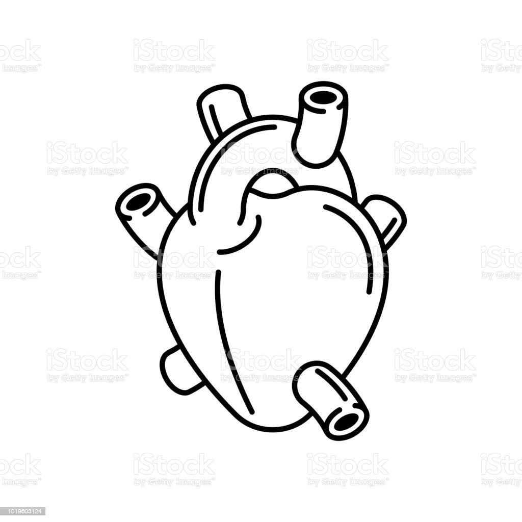 Heart Anatomy Organ Linear Style Isolated Vector Illustration Stock ...