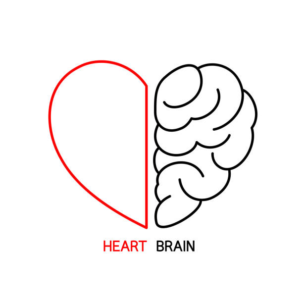 Heart and Brain concept, conflict between emotions and rational thinking, teamwork and balance between soul and intelligence. Outline icon design, vector illustration. love emotion stock illustrations
