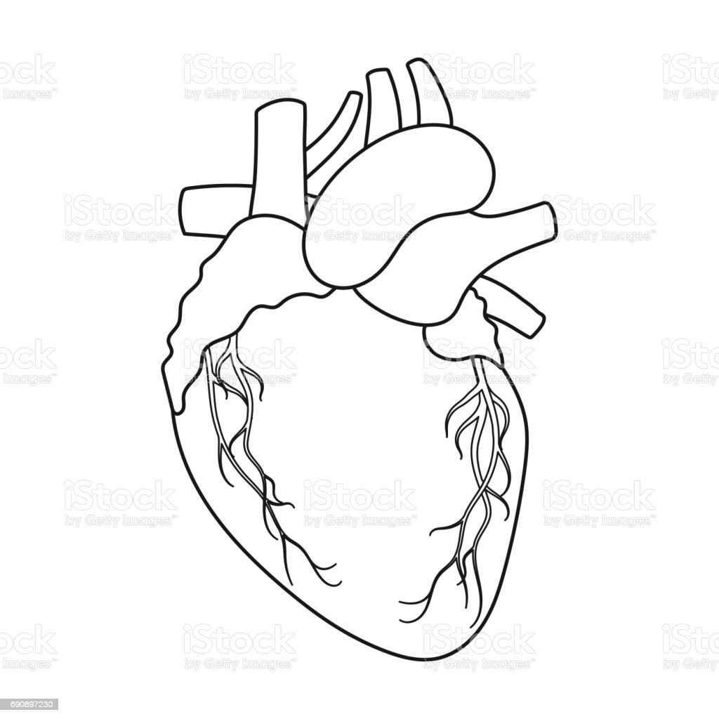 Heart icon in outline style isolated on white background organs heart icon in outline style isolated on white background organs symbol stock vector illustration buycottarizona Image collections