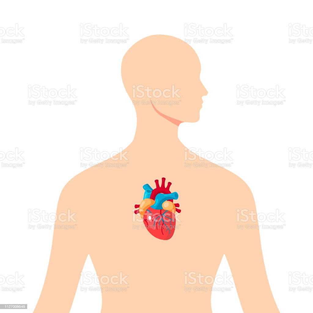 heart inside the male human body vector stock illustration download image now istock heart inside the male human body vector stock illustration download image now istock