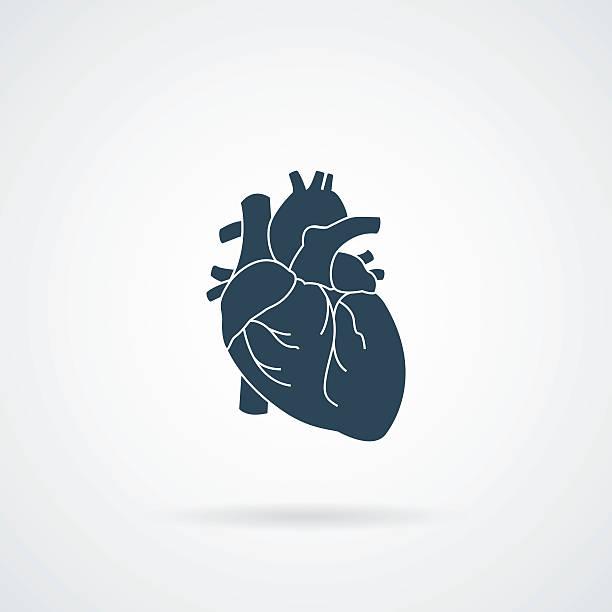 ilustrações de stock, clip art, desenhos animados e ícones de heart organ human isolated icon - coração humano