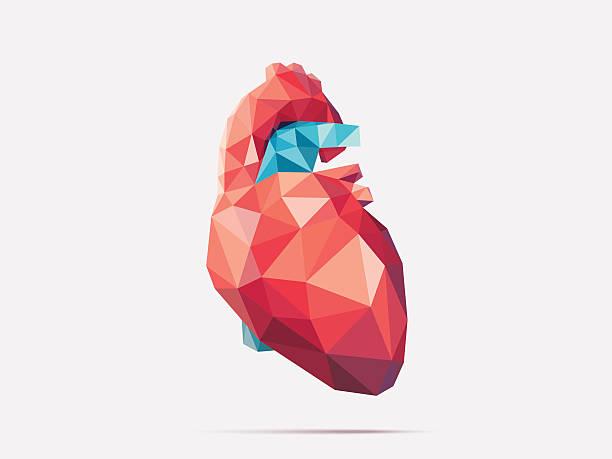 ilustrações de stock, clip art, desenhos animados e ícones de coração poli multifacetado - coração humano