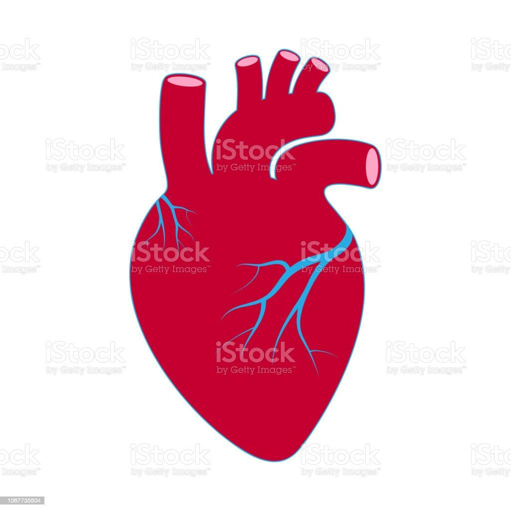 Heart red vector art illustration