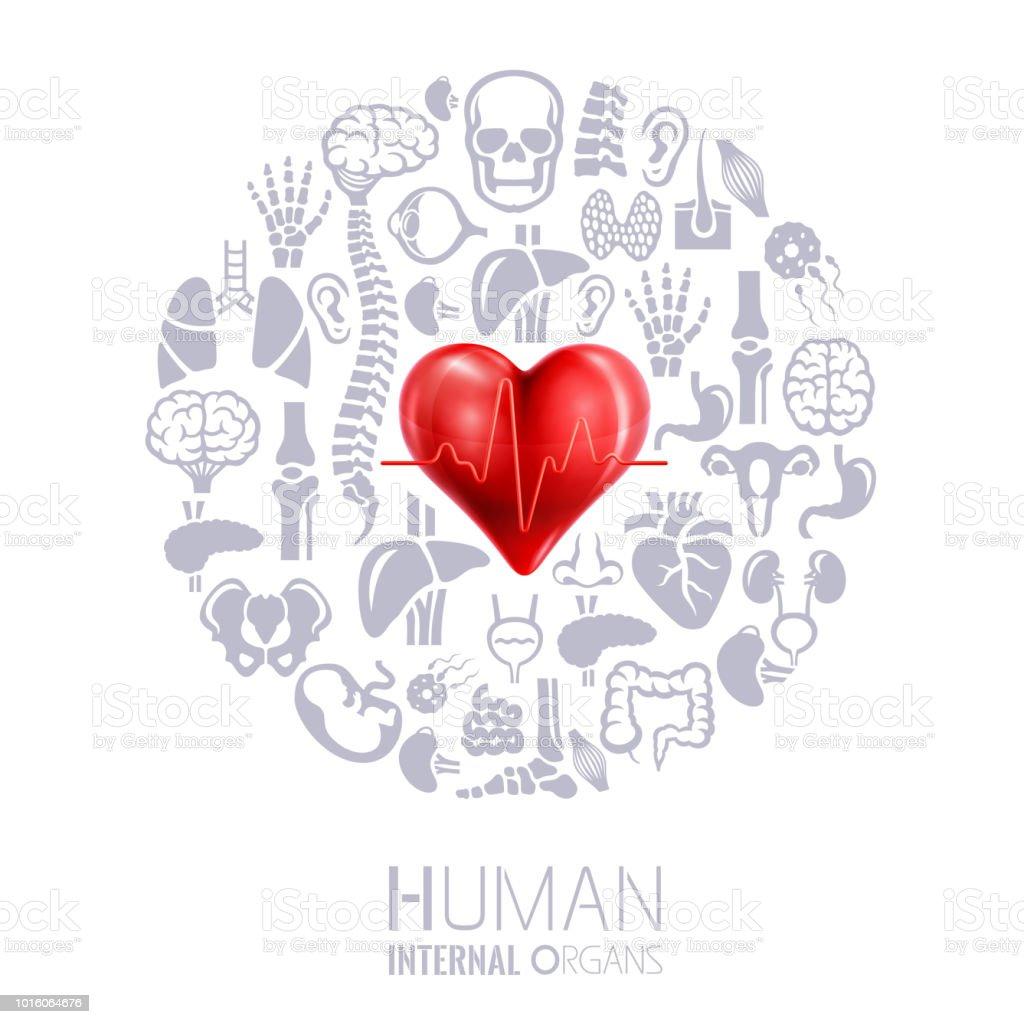 Ilustración de En Forma De Corazón Collage De Los órganos Internos ...