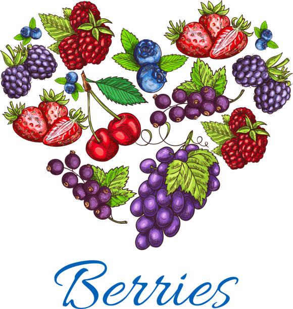 Heart shape of vector sketched berries vector art illustration