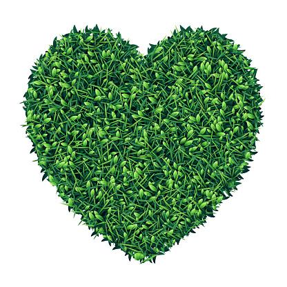 Heart shape piece of green grass