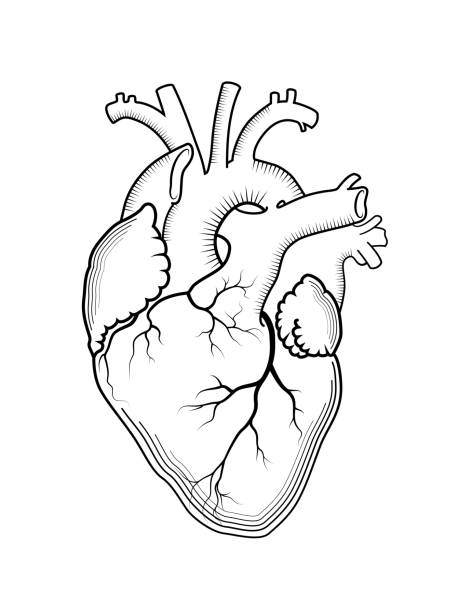 Best Human Heart Drawing Illustrations, Royalty-Free Vector