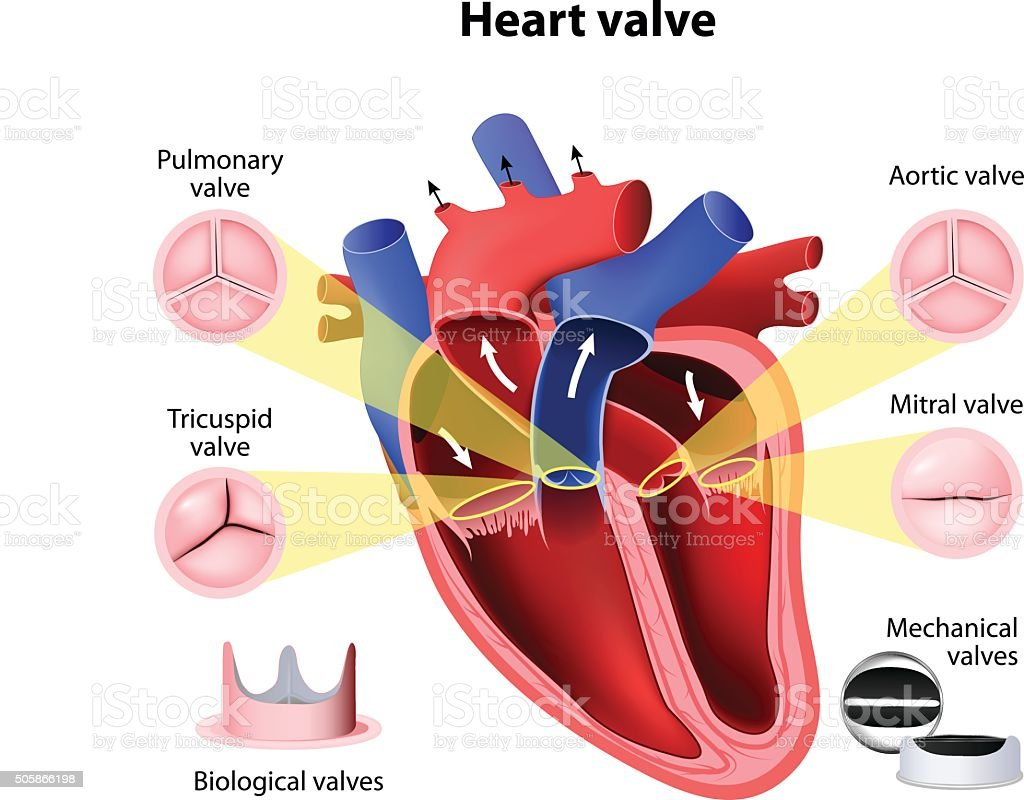 Heart valve surgery vector art illustration