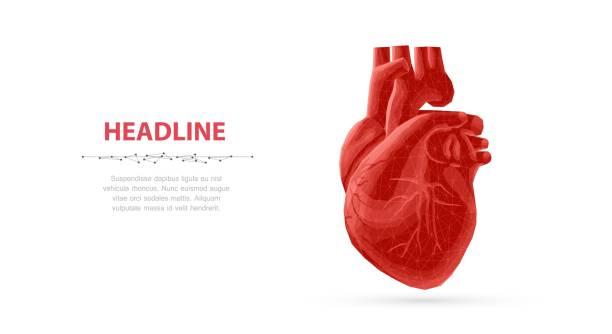 ilustrações de stock, clip art, desenhos animados e ícones de heart. - coração humano