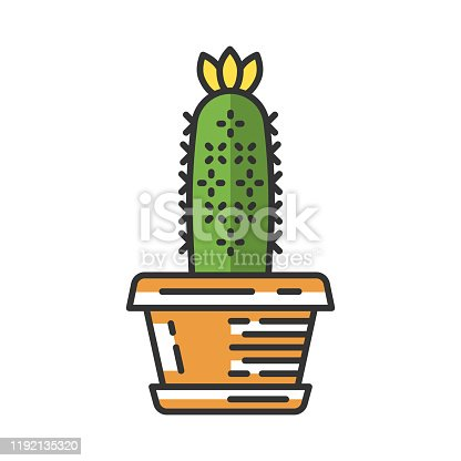 Hedgehog cactus in pot color icon. Echinopsis. Sea-urchin cactus in garden. South America native desert plant. Isolated vector illustration