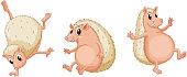 Hedgehog series
