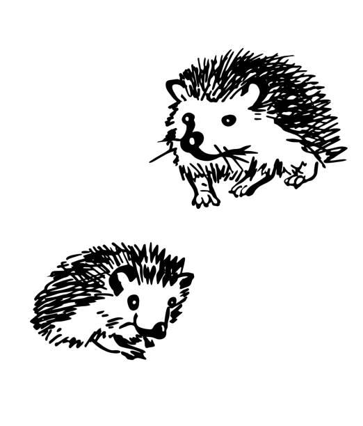 igel. stilisierte zeichnungssatz - igel stock-grafiken, -clipart, -cartoons und -symbole