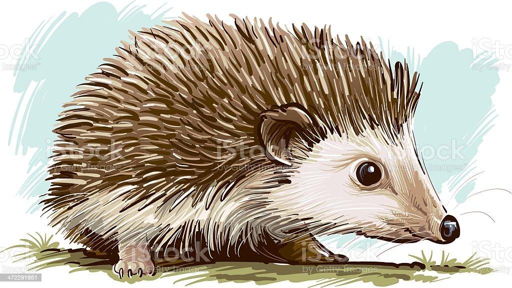 Hedgehog Illustration of sympathetic hedgehog. Animal stock vector