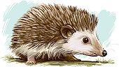 istock Hedgehog 472291951