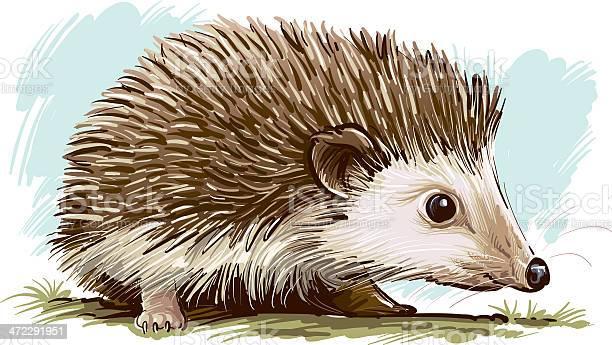 Hedgehog Stock Illustration - Download Image Now