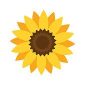 Helianthus or sunflower. Vector illustration