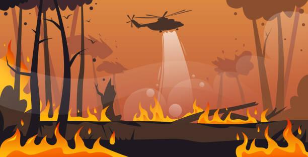 bildbanksillustrationer, clip art samt tecknat material och ikoner med helikopter släcker farlig löpeld i australien fighting bushfire torra träslag brinnande träd släcksystem naturkatastrof concept intensiv orange flames horisontell - skog brand