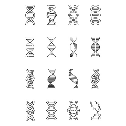 DNA helix linear icons set. Deoxyribonucleic, nucleic acid structure. Chromosome. Molecular biology. Genetic code. Thin line contour symbols. Isolated vector outline illustrations. Editable stroke