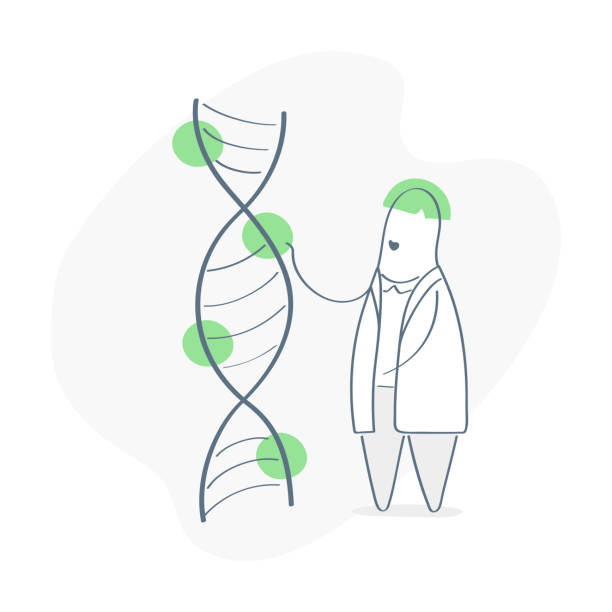 DNA helix spiral molecule structure and doctor scientist near it. Science, genetics, bio engineering, DNA sequence concept. Outline nanotechnology and biochemistry vector on white background. DNA, spiral molecule, doctor, scientist, genetics, bio engineering, biochemistry dna test stock illustrations