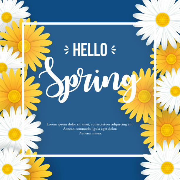 Hello Spring background Vector illustration of Hello Spring background with beautiful white and yellow flowers springtime stock illustrations