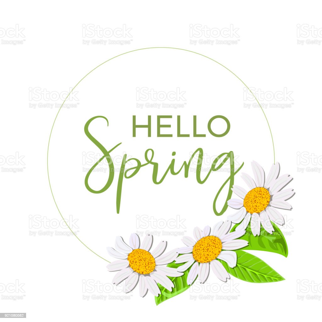 Hello spring beautiful daisy wreath isolated elegant floral beautiful daisy wreath isolated elegant floral chamomile flowers collection frame biocorpaavc Choice Image
