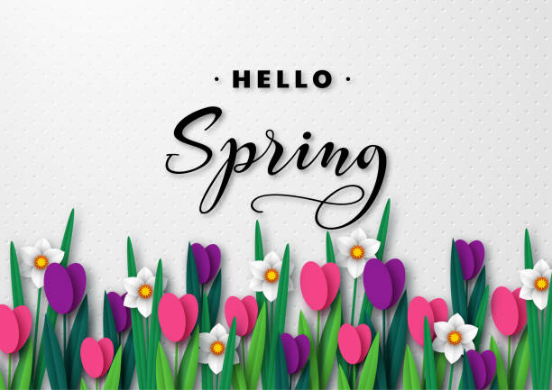 Hello Spring seasonal greeting banner. Hello Spring seasonal greeting banner. 3d paper cut spring flowers tulips and narcissus on white spotted background and greeting text. Vector illustration. spring stock illustrations