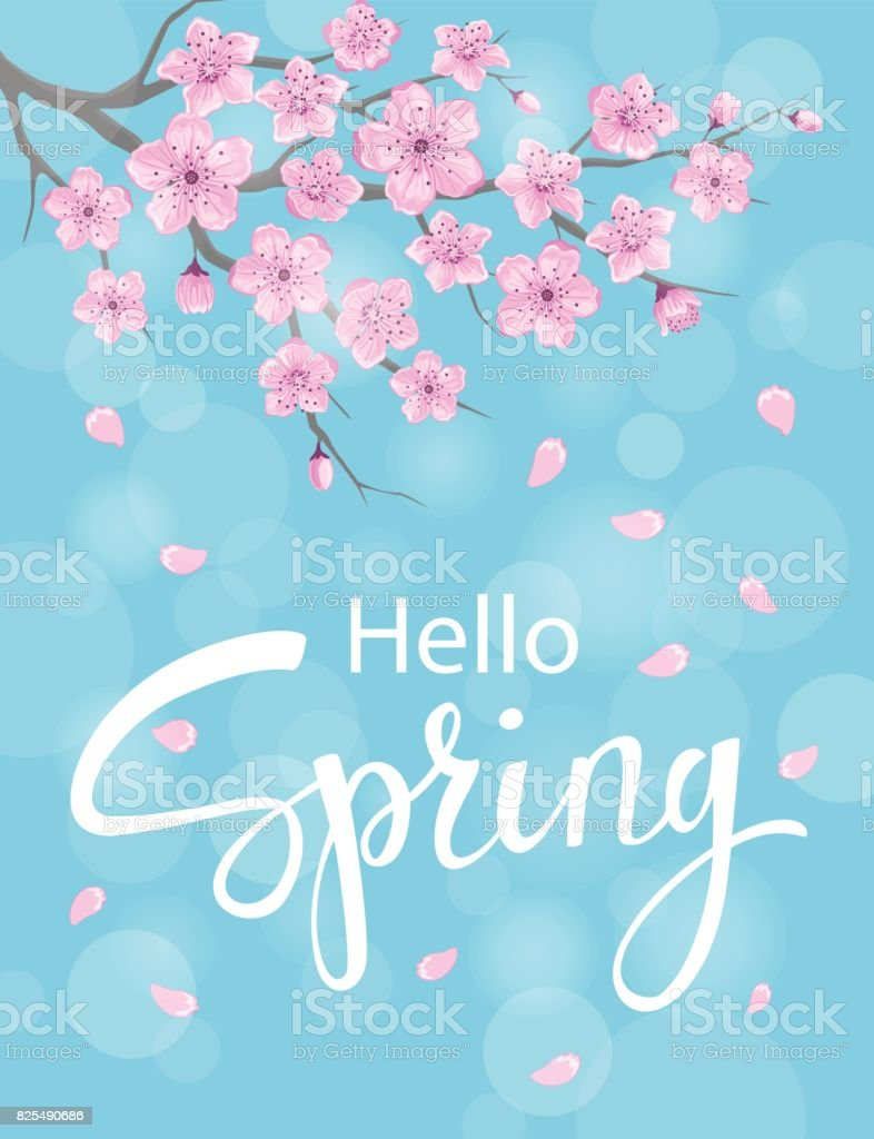 Hello Spring Vertical Background With Cherry Blossoms Flowers Branches On Blue Backdrop Bokeh Royalty