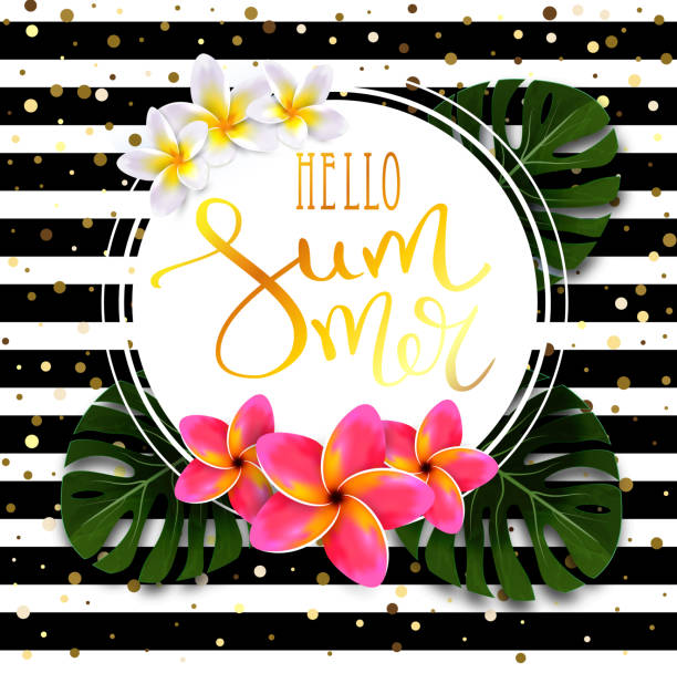 Hello summer calligraphic inscription in gold with a thin feather in a round frame with exotic flowers and leaves. Striped black and white background with splashes of gold. Vector exotic banner. Hello summer calligraphic inscription in gold with a thin feather in a round frame with exotic flowers and leaves. Striped black and white background with splashes of gold. Vector exotic banner. frangipani stock illustrations