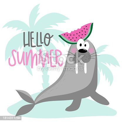 Hello Summer- Cute walrus with watermelon and island. Isloated on white background.