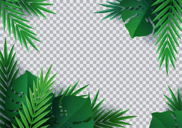 Hello summer, summertime. Background of tropical plants. Palm leaves, jungle leaf. The poster for sale and an advertizing sign.  Vector Hello summer, summertime. Background of tropical plants. Palm leaves, jungle leaf. The poster for sale and an advertizing sign.  Vector banana borders stock illustrations