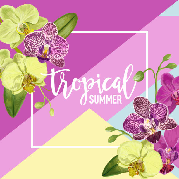 Top Purple Orchid Clip Art, Vector Graphics And