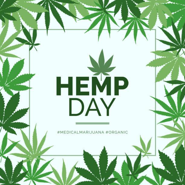 Hemp day and medical marijuana advertisement Hemp day and medical marijuana advertisement with green leaves frame marijuana stock illustrations