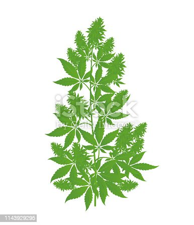 istock Hemp plant. Marijuana or cannabis indica tree. Isolated vector illustration on white background. 1143929295