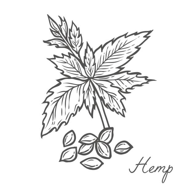 Royalty Free Hemp Oil Clip Art, Vector Images