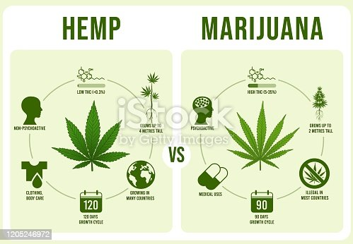 istock Hemp vs Marijuana infographics. Cannabis leaf, low and hight THC vector illustration 1205246972