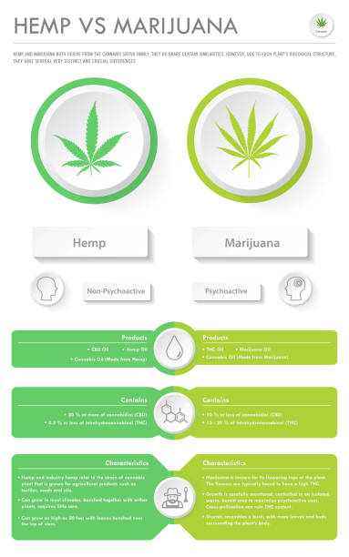 hemp vs marijuana vertical business infographic - evaluation stock illustrations