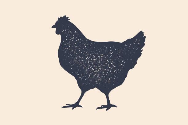 kura, kurczak. vintage logo, retro print, plakat dla butchery - kurczak stock illustrations