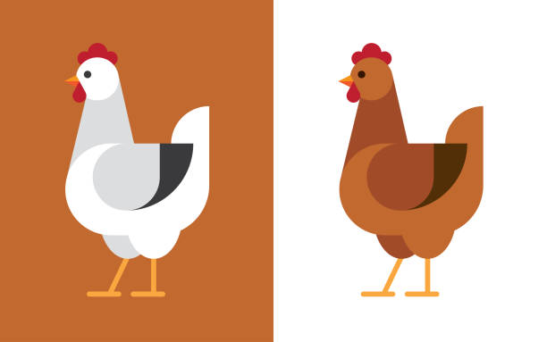Hen flat icon. Hen illustration in white and brown colors. Chicken flat icon. female animal stock illustrations