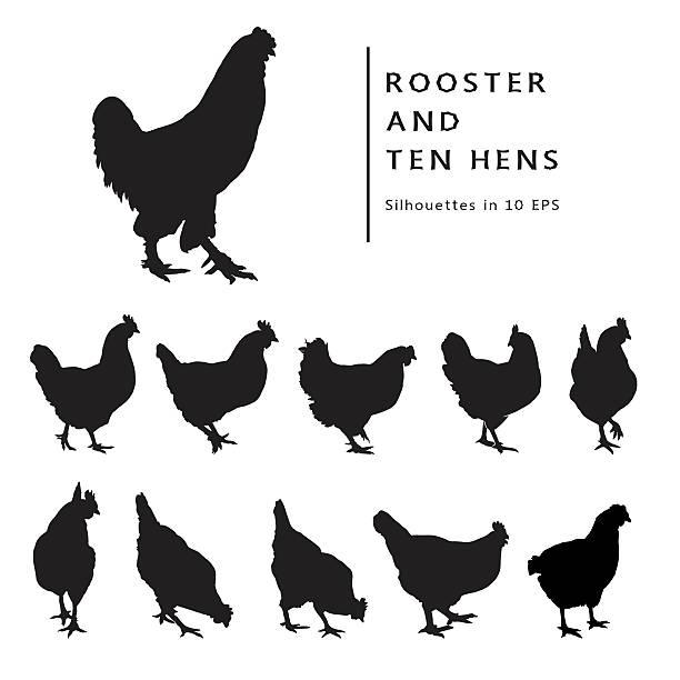bildbanksillustrationer, clip art samt tecknat material och ikoner med hens and rooster. - höna