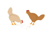 Two hens eating seeds vector icons in cartoon style. Pale domestic birds with wings, tails and red crest isolated on white, simple design for kid book