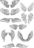 Heraldic bird or angel wings set