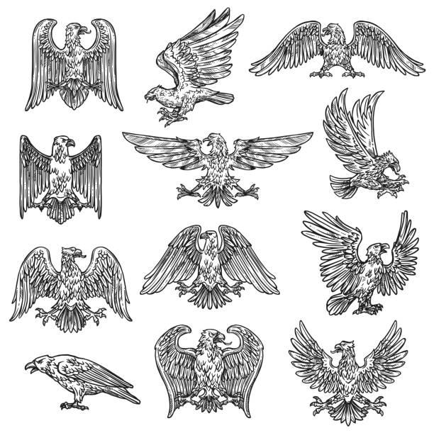 illustrations, cliparts, dessins animés et icônes de graphismes gothiques héraldiques de faucon d'aigle d'esquisse héraldique - aigle