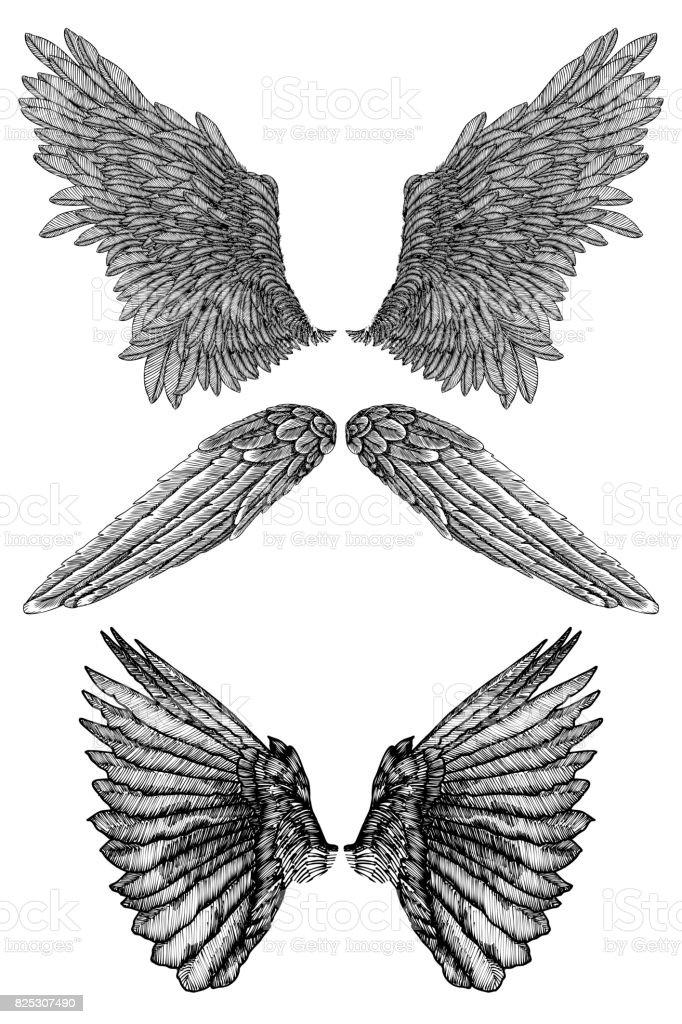 Heraldische Vleugels Instellen Voor Tattoo En Mascotte